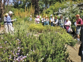 by: Barbara Blossom Ashmun, Fred Weisensee (wearing orange cap) leads a group of Hardy Plant Society members on a tour of Dancing Oaks Nursery, with tall foxtail lilies in bloom.