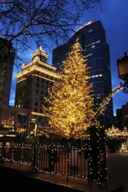 by: Tribune File Photo, Portland's 75-foot-tall Christmas tree will be lit Friday, Nov. 26, during a special ceremony at Pioneer Courthouse Square.