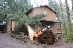 by: Nolene Triska A massive conifer tree crashed through the home of Rafael Reynoso on Sunday afternoon on Coupland Road when a fast-moving cold front tore through Estacada, Sandy, Boring and other areas in east Clackamas County. The severe storm knocked out power for thousands of Portland General Electric customers who were without power for five-plus hours on Sunday. The Reynoso family was home during the storm, but no one was injured.