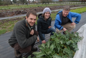 by: Vern Uyetake From left: David Knaus, the newly hired horticulture specialist; Pritha Golden, AmeriCorps volunteer; and Bob Carlson, CREST coordinator, hunker down to take a look at the purple broccoli that is one of the first crops grown at the CREST Farm to School project.