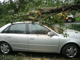 by: SUBMITTED FILE PHOTO Ornamental pear trees in the River Heights area of the Willamette neighborhood caused $4,000 of damage last fall to John Curalli's car on Alicia Court.