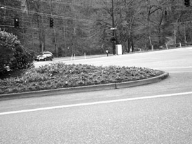 "by:  SUBMITTED PHOTO Lake Oswego resident Jack Carter feels that ""pansy/marigold landscaping is a waste."" And, ""if the city insists on doing it, the least we ought to be able to expect is some results to show for it, and this year there weren't.   The crop was a failure."" The photo above was taken at the intersection of  Boones Ferry and Country Club roads several months after planting, he said."