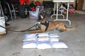 by: Submitted photo Washington County K-9 team uncovers 17 pounds of methamphetamine.