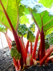 by: SUBMITTED PHOTO  