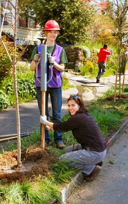 by: David F. Ashton Susie Peterson, Friends of Trees Neighborhood Trees assistant and Livia Castrucci plant on S.E. Umatilla Street in Sellwood.