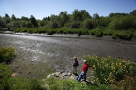 by: Jaime Valdez Craig Brown (left) and Ernie Coufal examine what was once Merestone Pond in Tigard. The city removed a beaver dam in the area, which state officials say might have gone against state guidelines.
