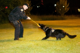 "by: Jaime Valdez Officer Robert Wolfe rewards his K-9 partner Enzo after he successfully located a ""suspect"" hidden in brush  during a late-night training session with Beaverton Police's K-9 Unit."