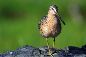 by: Courtesy of Susan Dimock 