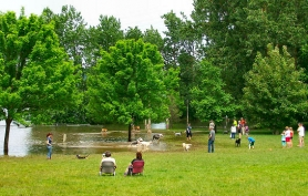by: Rita A. Leonard Park visitors and their dogs enjoyed the springtime high water at Sellwood Riverfront Park.