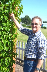 by: John Brewington KIWI ARBOR–Ross Carter is one of about 20 Master Gardeners that work on the Columbia County Fairgrounds Demonstration Garden each year. He shows off a Kiwi Arbor with a non-fuzzy variety here.