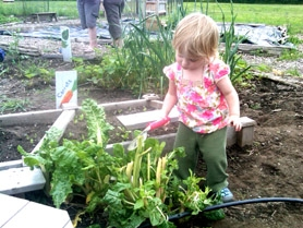 by: SUBMITTED PHOTO The Luscher Farm Children's Garden has been moved under the new LAMP, but it has been expanded to 4,800 square feet. Here, little Clare trims some chard.