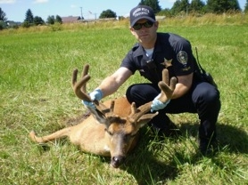 by: Oregon State Police Oregon State Police Trooper Mark Schoenborn believes this deer was killed using a small caliber rifle on July 20 at approximately 10:15 p.m. near SE 242nd Avenue and SE Bohna Park Road in a field outside of Damascus.