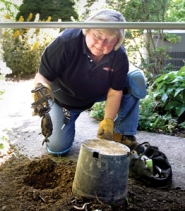 by: Jim Clark Mole Lady Kelly Wallaert pulls a dead mole, caught in a trap, from its hole. Wallaert is a successful mole hunter and stays busy five days a week.