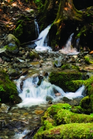 by: Stover E. Harger III BUBBLING BROOK — White water cascades over stones and moss about two miles from the Opal Creek trailhead in Marion County.