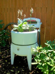 by: Rita A. Leonard This old-fashioned wringer washer became a planter in Westmoreland.