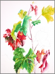 "by: Submitted photo A watercolor by tour Service Award winner Jane Levy-Campbell, titled ""Beauty Even After the Harvest (Pinot Noir Vines)."""