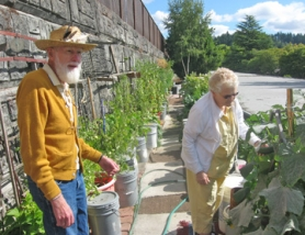 by: Barbara Sherman LABOR OF LOVE — Wallace Prowell has created a vegetable garden between a retaining wall below Beef Bend Road and a King City Apartments carport roof, where he and his wife Bobby enjoy the fruits of his labor.
