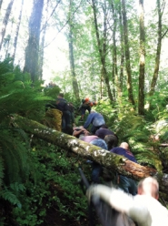 by: Photo courtesy of Forest Grove Fire & Rescue Forest Grove firefighters spent 4-and-a-half hours removing a Washington County inmate from a wooded area of the Tillamook State Forest after he injured his back last Wednesday, Oct. 12 while he was assigned to a work crew.