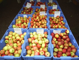 by: submitted photo At Portland Nursery's Apple Tasting this weekend you can sample more than 50 apples and pears. This could be your chance to find a new favorite. The tasting includes demonstrations of cooking apples and making apple cider, as well as lots of music and other events.