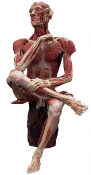by: Gunther von Hagens 