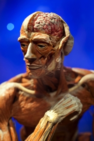 "by: CHRISTOPHER ONSTOTT ""Body Worlds and the Brain"" is now showing at OMSI."