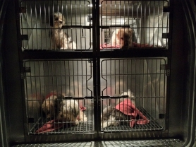 by: Submitted photo These are four of the more than 50 sick animals found in and around a filthy Aloha home on Tuesday.