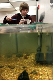 by: Jaime Valdez  Fowler Middle School student Zane Hall scoops up tiny salmon fry from a tank in Sue Manning's classroom. Students raised about 500 Chinook salmon and released them into Summer Creek on Wednesday.