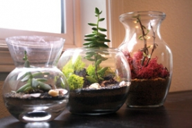 by: Lisa K. Anderson A succulent terrarium is a low-maintenance miniature garden.