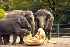 by: KATHY STREET Showing her enthusiasm and getting a foot into her work is 3-year-old