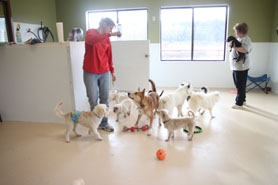 by: Alana Kansaku-Sarmiento Krystyna Schmidt and Deb Bowen play with some of the dogs at Oregon Dog Rescue's new location in Tualatin.