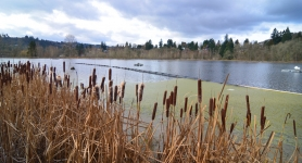 by: VERN UYETAKE Public input is sought for the 39-acre West Linn Blue Heron property. A new interactive website called Imagine Willamette was set up to encourage discussions about the property located off Volpp Street in the Willamette neighborhood.