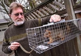 by: Vern Uyetake West Linn resident Bob Brune says goodbye to this squirrel before driving it across the Willamette River to Oregon City and releasing it at Clackamette Park. Squirrels have been wreaking havok on cars in his neighborhood by chewing on wiring costing him — and neighbors — hundreds of dollars.