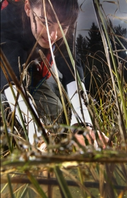 by: Jaime Valdez Madalyn Boultinghouse diligently counts red-legged frog eggs.
