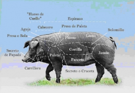 by: SUBMITTED GRAPHIC Iberico de Bellota pork from Spain is a specialty meat product now available in our area, thanks to Nicky USA. Fed on acorns and wild herbs, the pork is butchered into cuts that are slightly different from American meat cuts.