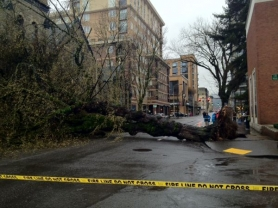 by: Pamplin Media Group A century-old elm fell Wednesday afternoon in the South Park Blocks near Southwest 10th Avenue and Jefferson Street. A woman was injured when she was pinned beneath the fallen tree.