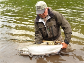 by: Contributed photo Fly-fishing guide Mark Bachmann caught this 16- to 18-pound spring Chinook in the Sandy River in June 2011.