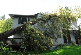 by: Vern Uyetake, A large cottonwood tree fell onto this home at 5700 River St. around 2:30 p.m. on April 3.