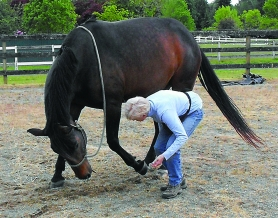 by: Submitted, Fanny, a magnificent Bavarian Warm Blood Mare, takes a bow, which always gets cheers and applause when she puts on shows for Lake Oswego Finance Director Ursula Euler's friends.