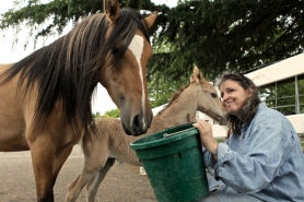 by: Jaime Valdez, Stacey Harnew-Swanson pauses a moment and smiles while feeding Mariquita and her newborn (no name yet).