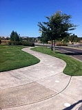 by: SUBMITTED PHOTO: CITY OF WILSONVILLE - Students walking to and from Lowrie Primary School in Wilsonville are guided by white dots on the sidewalk, indicating the safest route to walk.