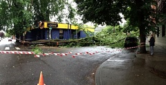 by: COURTESY OF KOIN LOCAL 6 - A tree collapsed early Friday morning, damaging the Gypsy Restaurant and knocking out power to more than 200 Northwest Portland customers.