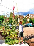 by: RITA A. LEONARD - Ten-year-old Milo measures an eleven-and-a-half-foot-tall hollyhock in front of his Brooklyn home.