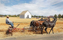 Photo Credit: SUBMITTED - Historic events - Wayne Beckwith will take his mules to Harvest Fest this year and create 'Half-Assed Ice-Cream with a Mulish Kick,' using the energy created by a walking mule to churn a vintage ice cream maker.