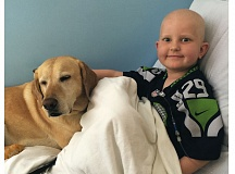 Photo Credit: COURTESY: ALLISON HALPIN - Bailey (left) and Ryker Halpin are both a part of Randall Childrens Hospitals Canines and Childhood Cancer study.