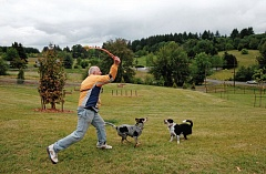 Photo Credit: TIMES FILE PHOTO: JONATHAN HOUSE - Michael Perry throws a ball to his two dogs Sally and Mya at Paul and Verna Winkelman Park near Cooper Mountain. The Tualatin Hills Park and Recreation District and Metro plan to purchase a parcel of land to expand the park.