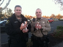 Photo Credit: WASHINGTON COUNTY SHERIFF'S OFFICE - Washington County Sheriff's Office deputies display two of the eight kittens recovered from a stolen vehicle on Friday. The kittens were unharmed and returned to the Bonnie. L Hays Animal Shelter in Hillsboro before being put up for adoption on Saturday afternoon at PetCo in Hillsboro.