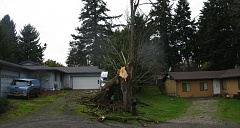 Photo Credit: PHOTO BY: RAYMOND RENDLEMAN - Last week's wind storm downs a tree along Strawberry Lane in unincorporated Milwaukie, barely missing nearby buildings. The storm serves as another reminder to local property owners about protecting their assets.