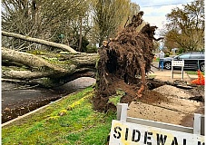 PHOTO COURTESY OF RACHEL IMMEL - Next to Sellwood Park, a tree toppled across S.E. 7th Avenue at Lexington Street, witnessed by the reader who contributed this photo to THE BEE.