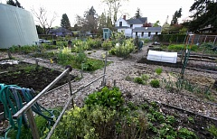 TRIBUNE PHOTO: JONATHAN HOUSE - The Sellwood Community Garden waits for spring to begin.