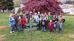 PHOTO BY: MICHAEL READ - Oak Grove Cub Scout Pack #181 joins North Clackamas Urban Watersheds Council volunteers in helping plant trees at William J. Wild Memorial Park.
